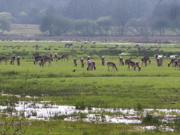 Pulborough_Brooks_RSPB
